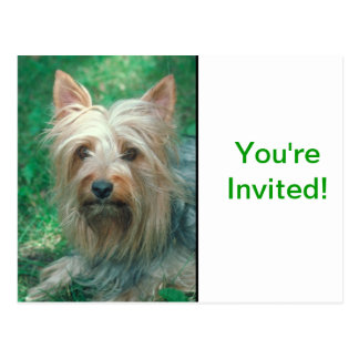 Australian Terrier Postcard