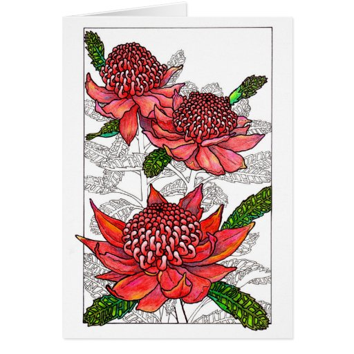 Australian Waratahs Floral Design Cards