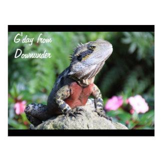 Australian Water Dragon Postcard