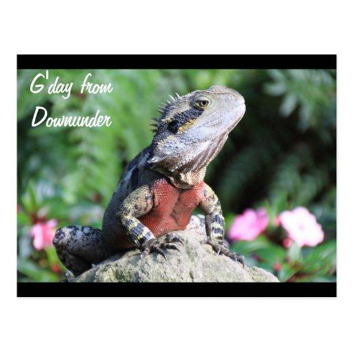 Australian Water Dragon Post Card