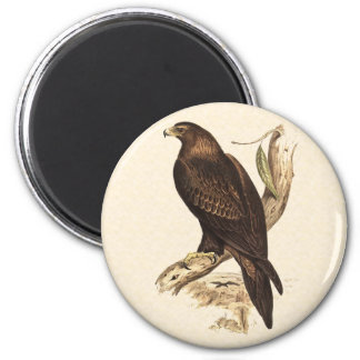 Australian Wedge Tailed Eagle. Huge Bird of Prey. 6 Cm Round Magnet