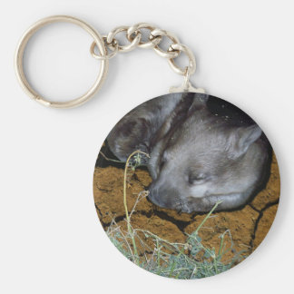 Australian Wombat Asleep In His Den Key Ring