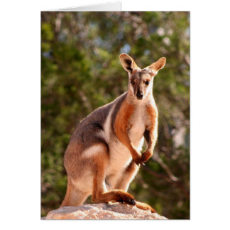 Australian yellow-footed rock wallaby card
