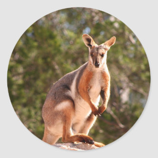 Australian yellow-footed rock wallaby classic round sticker
