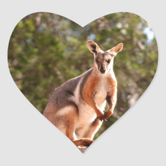 Australian yellow-footed rock wallaby heart sticker