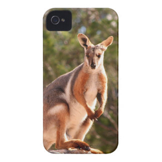 Australian yellow-footed rock wallaby iPhone 4 case
