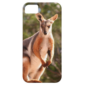 Australian yellow-footed rock wallaby iPhone 5 covers