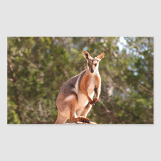 Australian yellow-footed rock wallaby rectangular sticker