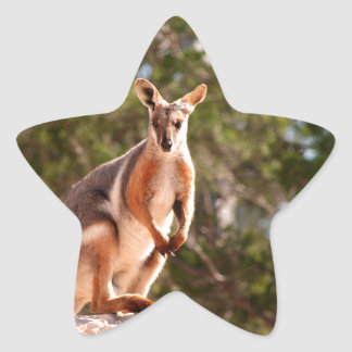 Australian yellow-footed rock wallaby star sticker