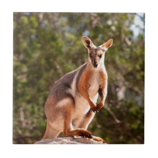 Australian yellow-footed rock wallaby tile