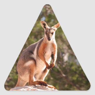 Australian yellow-footed rock wallaby triangle sticker