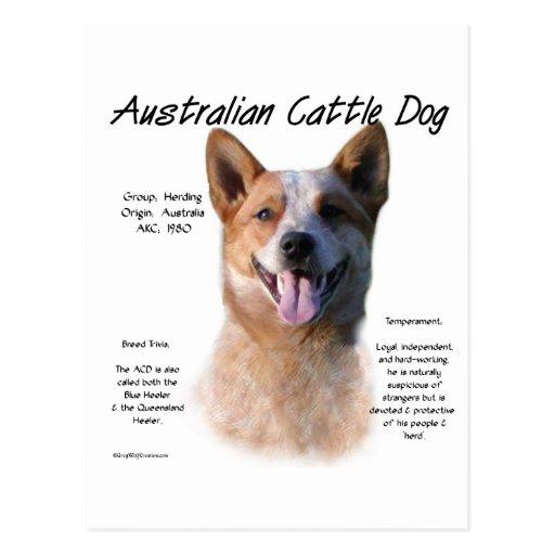 AustralianCattle Dog (redspec) History Design Postcards