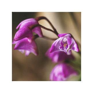 Australia's Native Orchid Small Dendrobium Canvas Prints