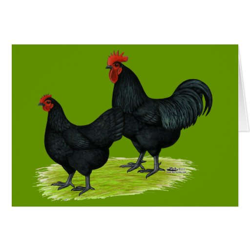 Australorp Black Chickens Greeting Cards