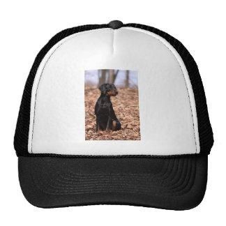 Austrian Black and Tan Hound Puppy Cap