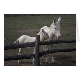 Austrian-Hungarian White Donkey Card