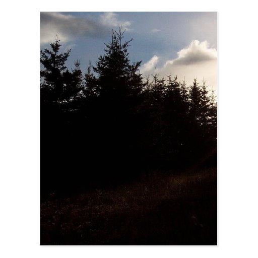 Autumn Air Postcard