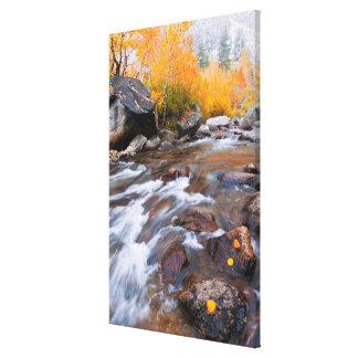 Autumn along Bishop Creek, CA Canvas Print