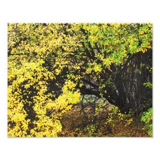 Autumn Apple Tree Photo Print