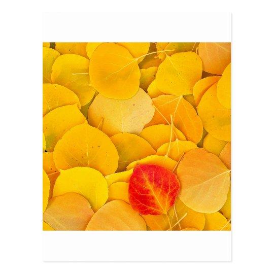 Autumn Aspen Leaves Eastern Sierra California Postcard
