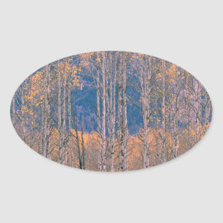 Autumn Aspen Splendor Jackson Hole Wyoming Sticker