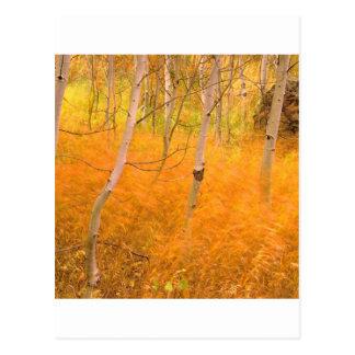Autumn Aspens And Windblown Grasses Idaho Postcard