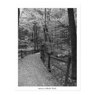 """Autumn at Blendon Woods"" Postcard"