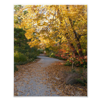 Autumn at Botanical Garden in Madison Photo Art