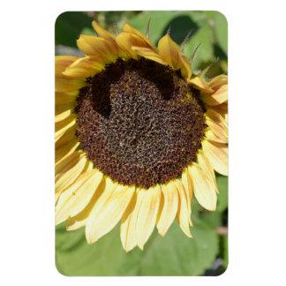 Autumn Beauty- Sunflower Magnet