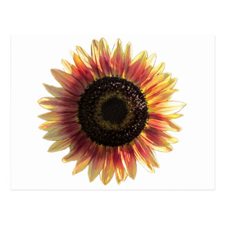 Autumn Beauty Sunflower Postcard