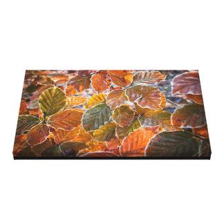 Autumn Beech Leaves Canvas Print
