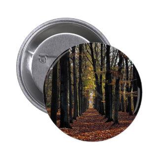 Autumn beech wood rural Netherlands in Europe Pins
