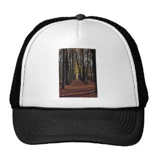 Autumn beech wood, rural Netherlands in Europe Mesh Hats