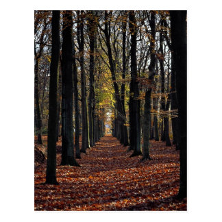 Autumn beech wood, rural Netherlands in Europe Post Cards