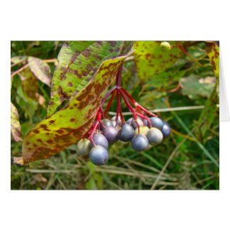 Autumn Berries Greeting Card
