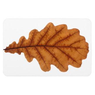 Autumn brown oak leaf rectangular photo magnet