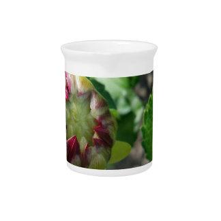 autumn bud pitcher