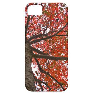 Autumn Case