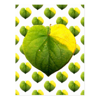 Autumn Catalpa Love Leaf Postcard