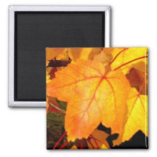 Autumn color magnet