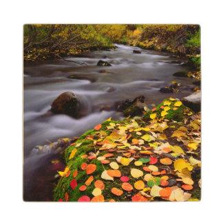Autumn Colors along McGee Creek Wood Coaster