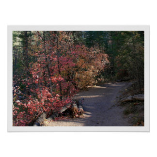 Autumn Colors in the Shade Posters