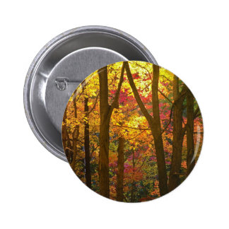 Autumn Colors in Woods NJ Buttons