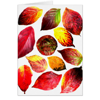 Autumn Colors Leaf Display Greeting Card