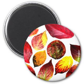 Autumn Colors Leaf Display Fridge Magnet
