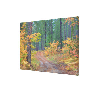 Autumn colors of forests in The Cascade 2 Canvas Print