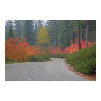 Autumn colors of forests in The Cascade 4 Poster