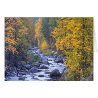 Autumn colors of forests in The Cascade 6 Card