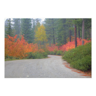 Autumn colors of forests in The Cascade 7 Photographic Print