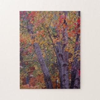 Autumn Colors Puzzle